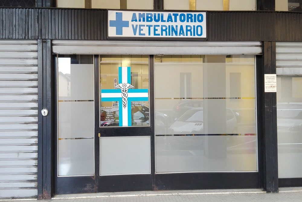veterinario collini