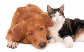 veterinario collini castellanza